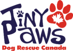 Tiny Paws Logo